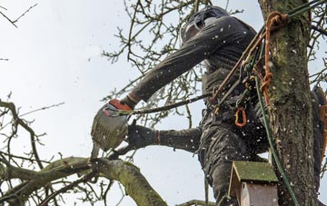 the process of removing dead wood from Southall trees