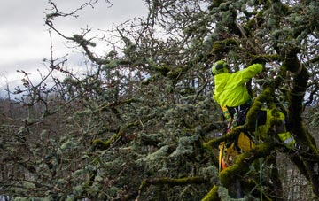 experienced Southall arborists are needed