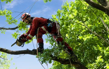 find trusted rated Southall tree surgeons in Ealing