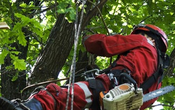 hiring professional Southall tree surgeons