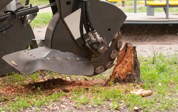 professional Southall stump grinding services