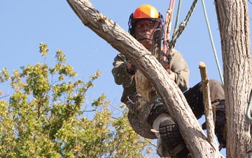 finding qualified Southall tree surgeons