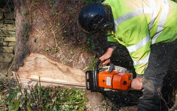 tree removal Southall, Ealing
