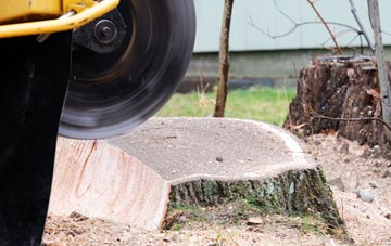 tree stump grinding Southall, Ealing