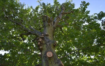 what is Southall tree surgery?