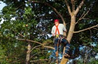 Southall tree crown reduction services
